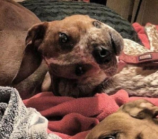 La foto de un perro que nadie comprende — Ilusión óptica