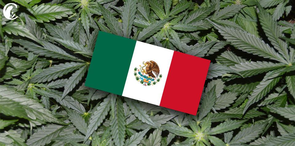 México estudia legalizar la marihuana en corto plazo - Diario El Sol.  Mendoza, Argentina.