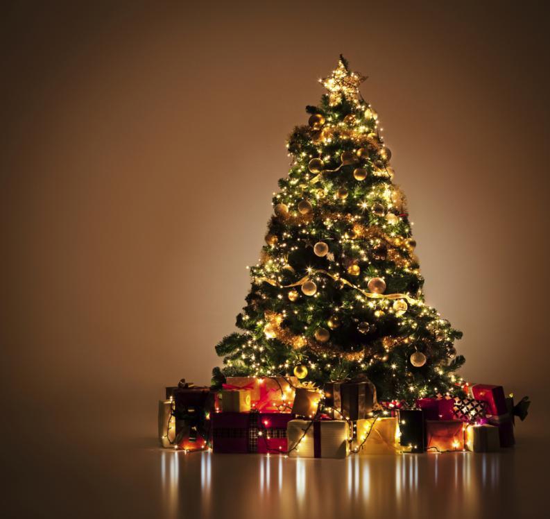 Le Saco Una Foto Al Arbol De Navidad Y Se Llevo Un Gran Susto
