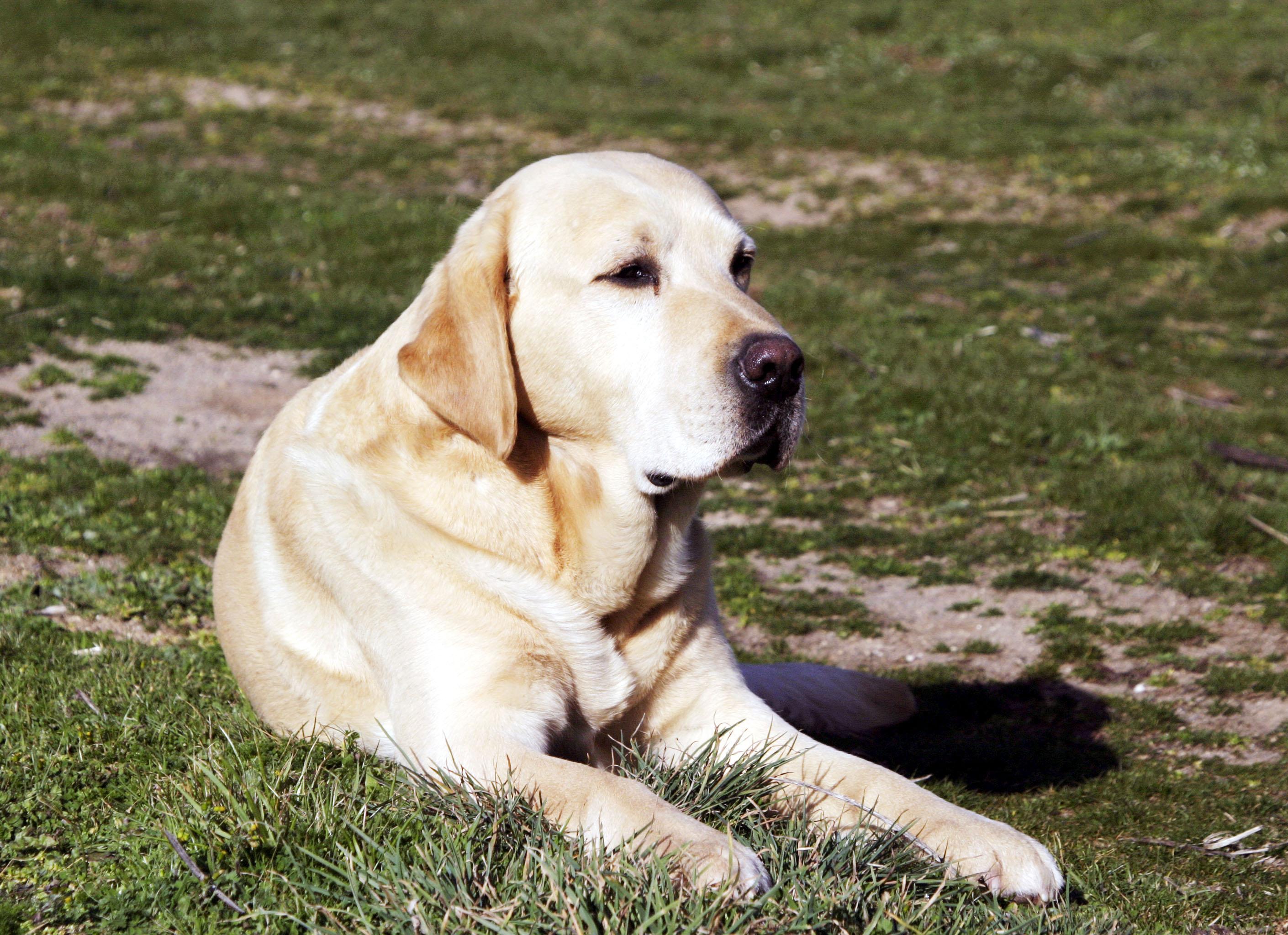 Investigadores revelaron una nueva fórmula para calcular la edad de los perros