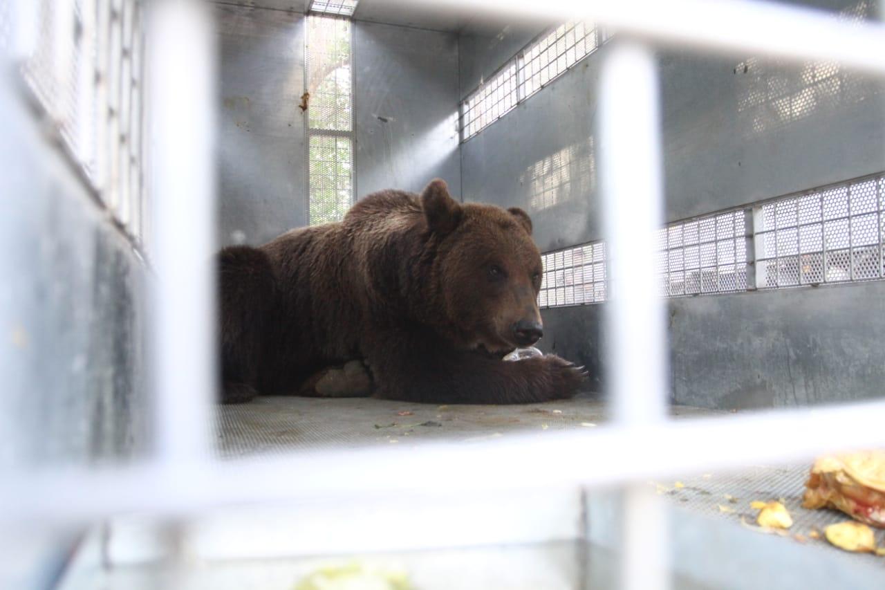 Fotos: trasladan a 10 osos del Ecoparque a un santuario en EEUU - Diario ElSol.com.ar Mendoza