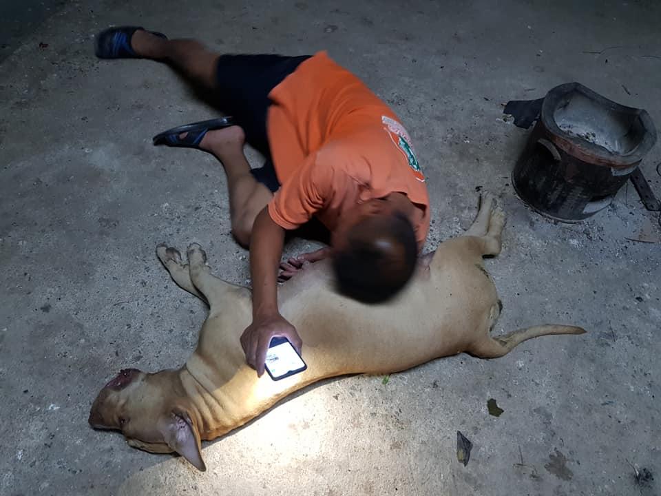 Perra embarazada muere defendiendo su casa de una cobra venenosa
