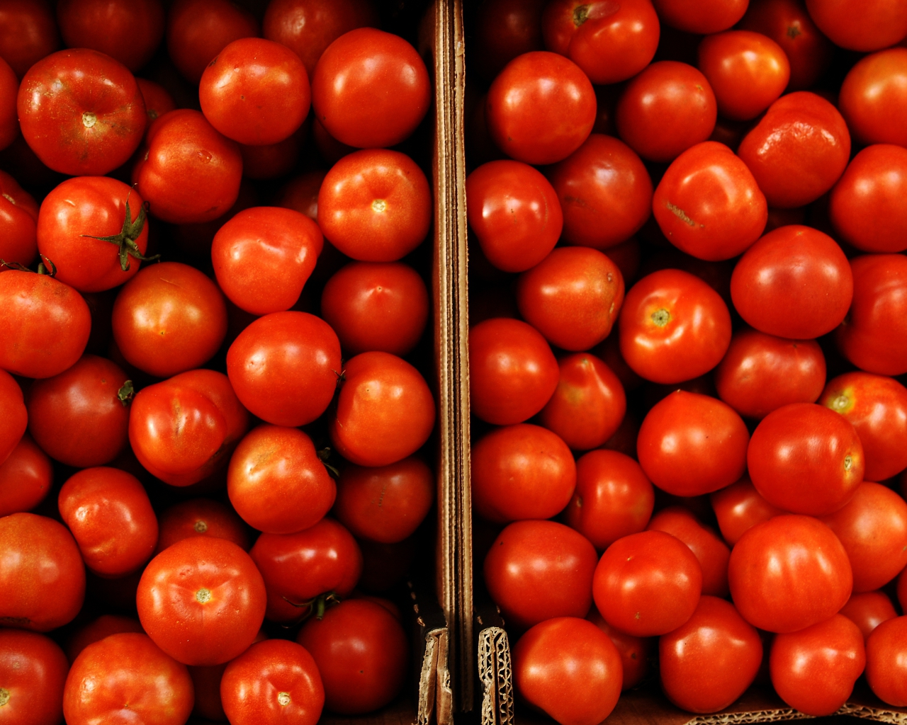Insospechados beneficios por comer tomates - ElSol.com.ar - Diario ...