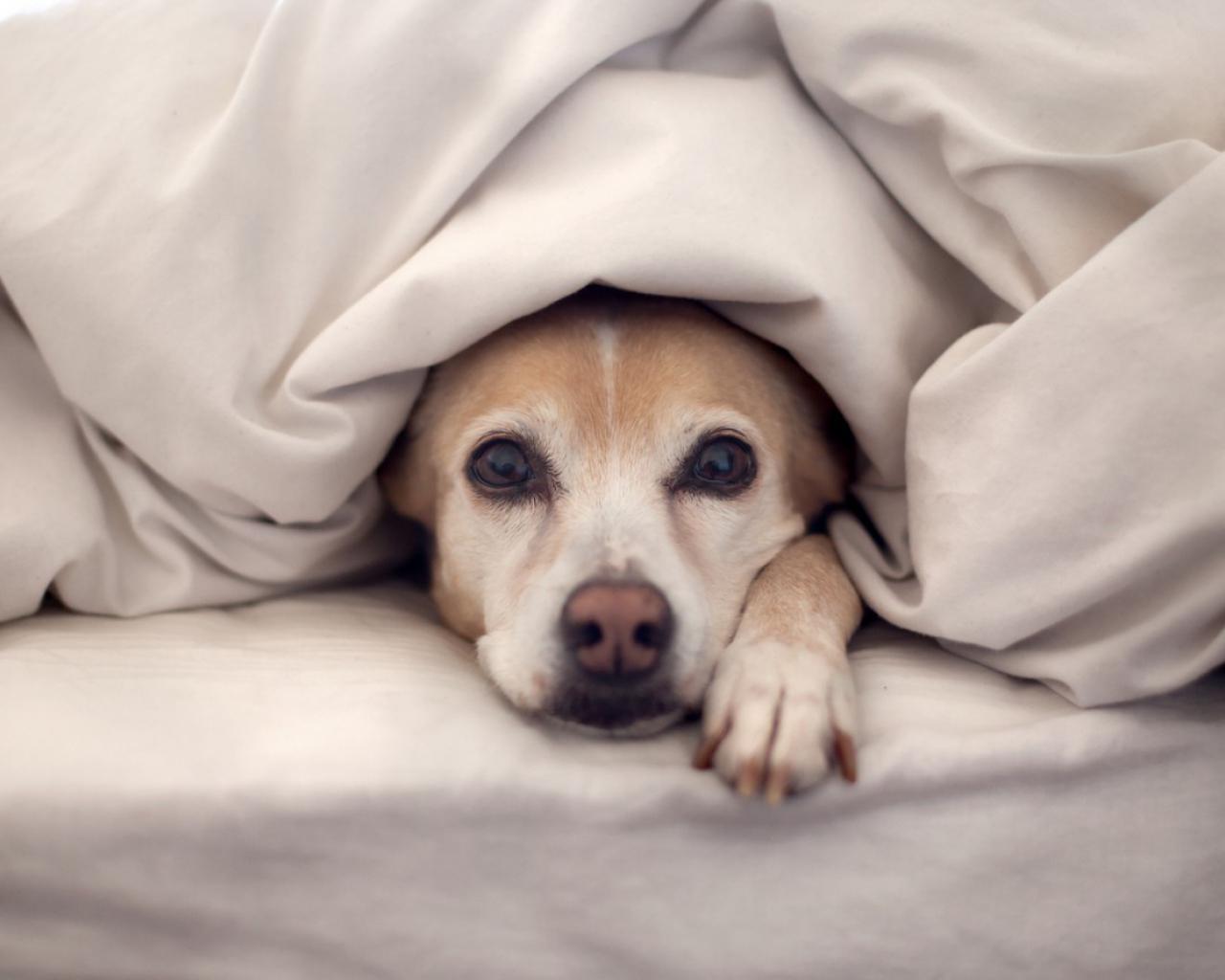 Resultado de imagen para airbnb mascotas