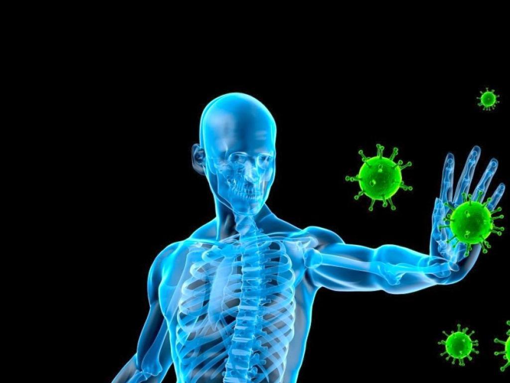 Resultado de imagen para sistema inmunologico